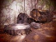 Fallen Tree, NM