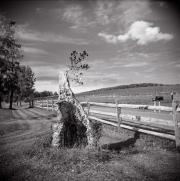 Stump near Millbrook Winery