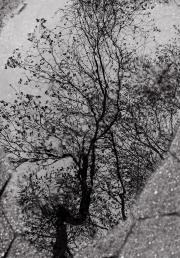 Tree Reflects