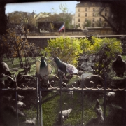 French Pigeons
