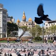 Catalonia Square Pigeons