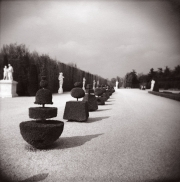Topiary. Chateau de Versailles, France