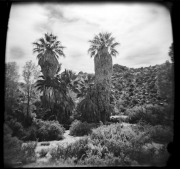 Thousand Palms