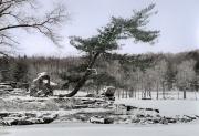 Innisfree Pine