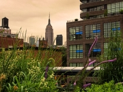 High Line Gardens Compliment the Empire State Building