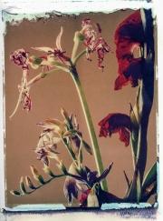 Beautiful Dead Flowers Series